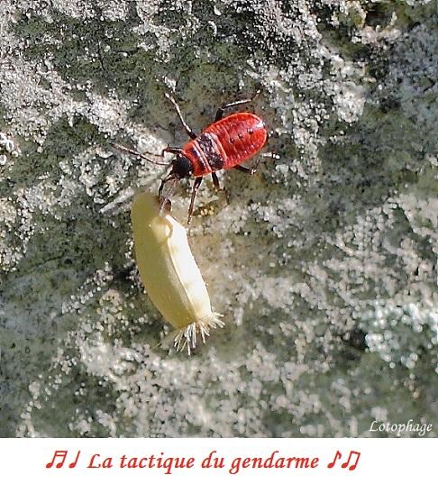 Une photo par jour, thème totalement libre ! - Page 6 Gendar10