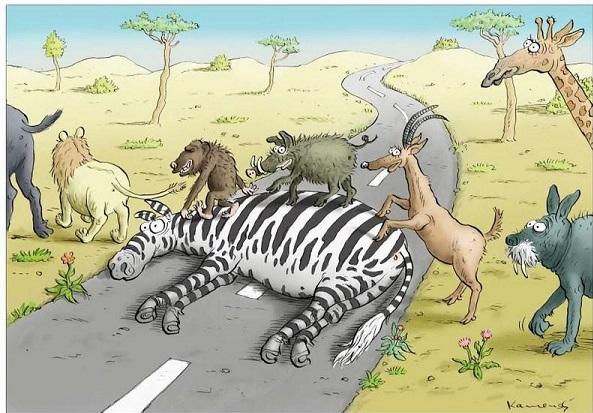 [Jeu] Association d'images - Page 11 Zebras11