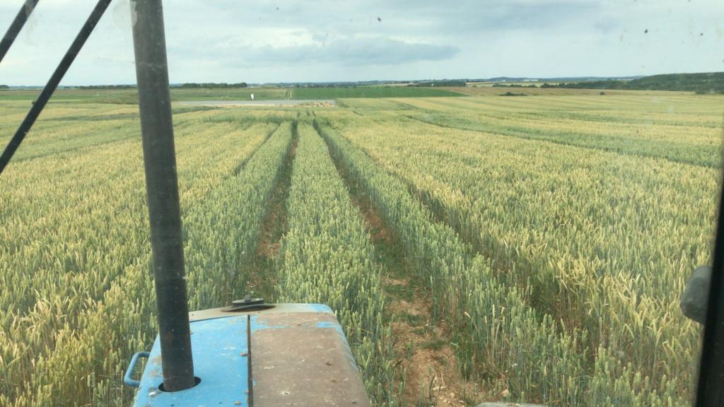 Suivi des blés 2020 - Page 20 223ba210