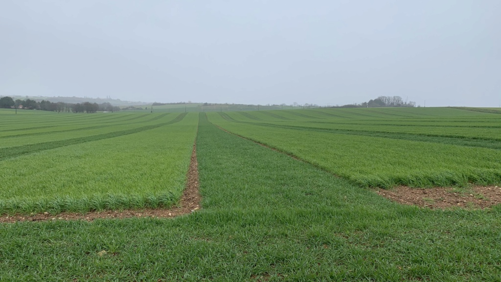 suivi blé 2021 - Page 3 E1f5c510