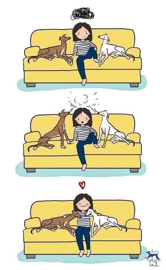 les chiens, antidépresseurs... ? Image154