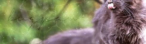 [WindClan vs RiverClan] Avenge him - Pagina 3 Bugpaw11