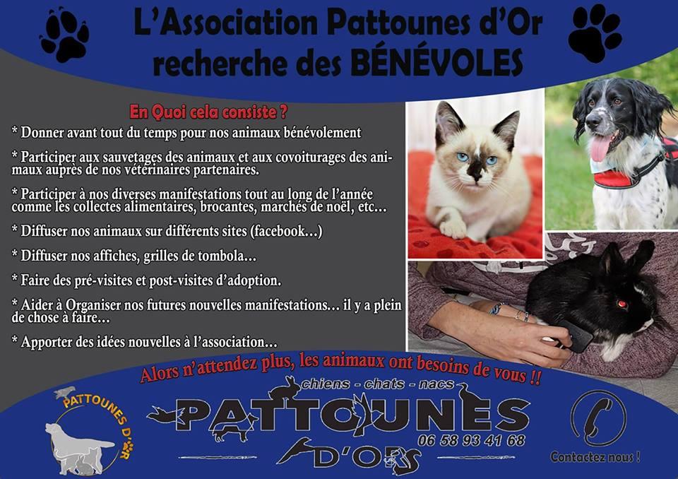 """PATTOUNES D'OR """"RECRUTE"""" ! DEVENEZ BÉNÉVOLE POUR NOTRE ASSOCIATION ! 37307310"""