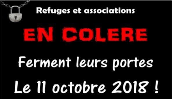 Mouvement solidaire pour la stérilisation obligatoire le 11 octobre. 38458610
