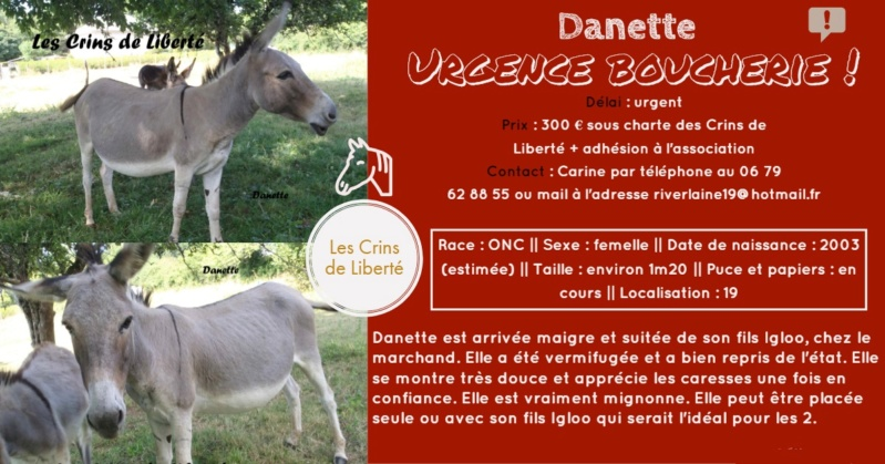 Dept19-5 ans- DANETTE & DIVA - ânesses ONC - Réservées par justine (sept 2019) Danett10