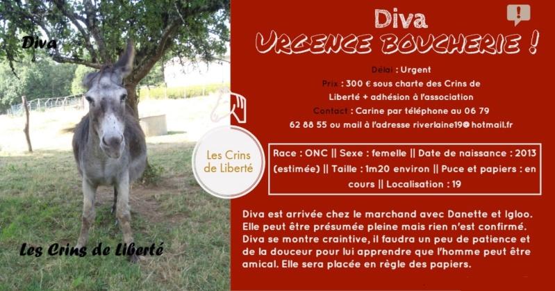 Dept19-5 ans- DANETTE & DIVA - ânesses ONC - Réservées par justine (sept 2019) Diva11