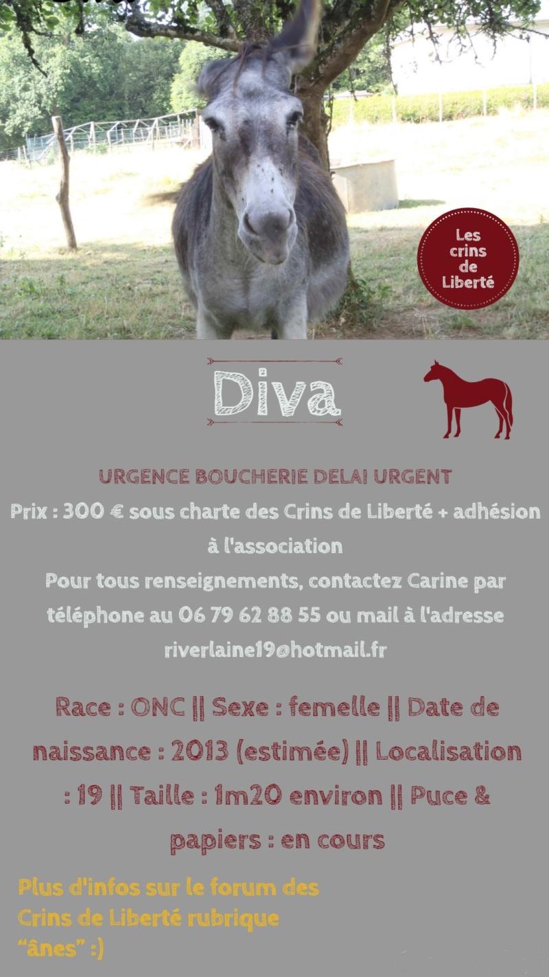 Dept19-5 ans- DANETTE & DIVA - ânesses ONC - Réservées par justine (sept 2019) Diva12