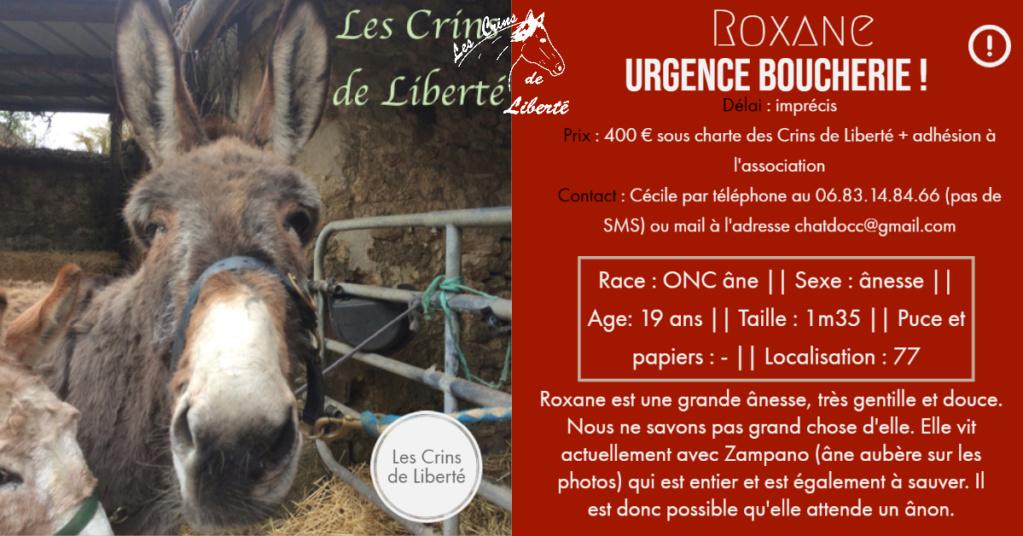 Dpt 77, 19 ans, Roxane, ânesse ONC, adoptée par Laurence (juin 2020) Fiche100