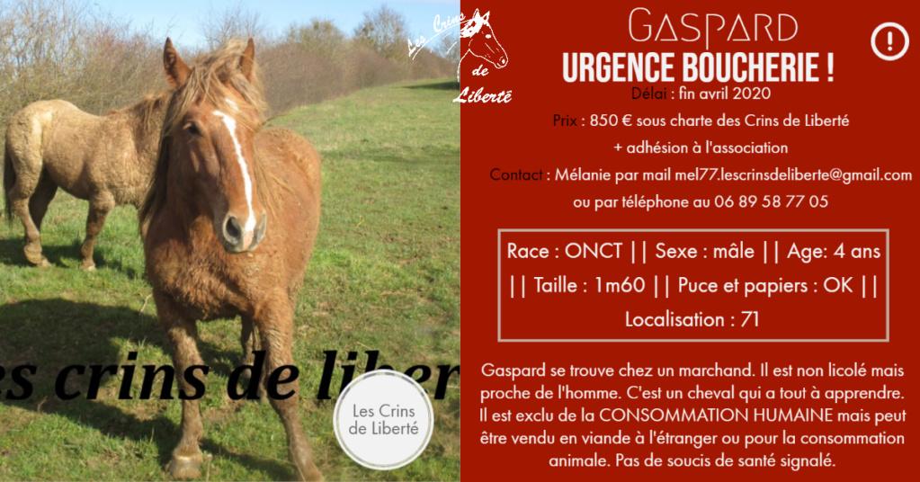 (Dept 71) 4 ans - GASPARD (Mistral) - ONC T - Mâle -Réservé par Nadine E. (avril 2020) Fiche103