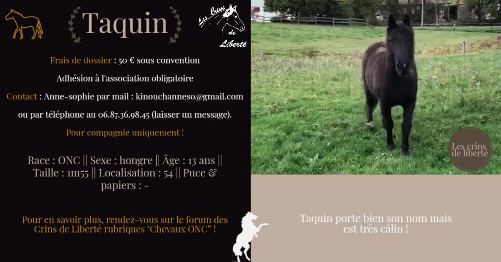DPT 54 - 13 ans- TAQUIN- ONC selle- Contact Anne-sophie Fiche105
