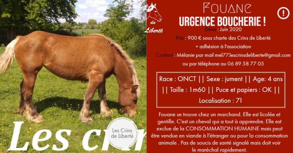 (Dept 71) 4 ans - FOUANE - ONC T - jument - Réservé par Lucie K (juin 2020) Fiche114
