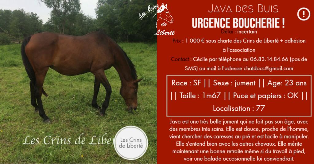 Dpt 77, 23 ns, Java des Buis, jument SF, urgent, contact Cécile Fiche119