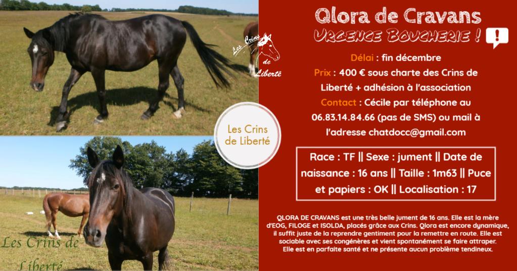 Dpt 17, 16 ans, Qlora de Cravans, jument TF, adoptée par Anne (juillet 2020) Fiche121