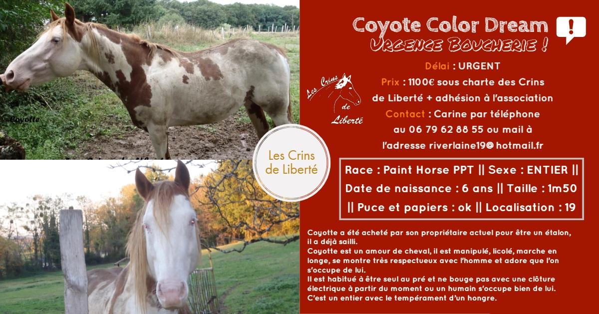 Dept19-6 ans- COYOTTE C-D- Paint horse-réservé par Steff39 (Janvier 2019) Fiche123