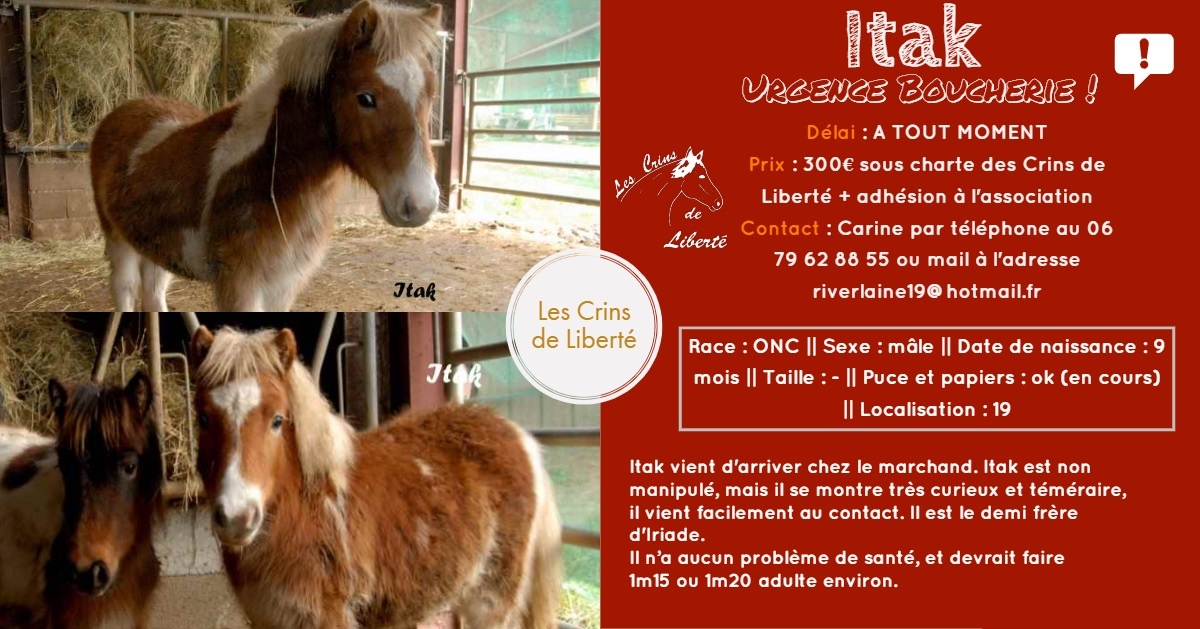 Dept19-ITAK & IRIADE- poney ONC- Réservés par Steff39 (janv 2019) Fiche124