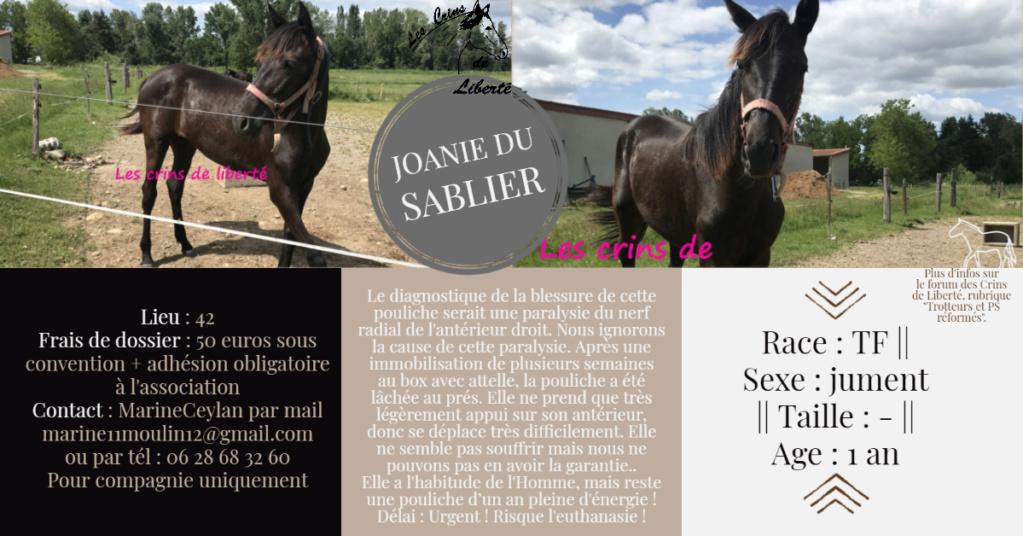 Dpt 42- 1 an et 1 mois - Joanie Du Sablier - adopté par Faustine  Fiche126