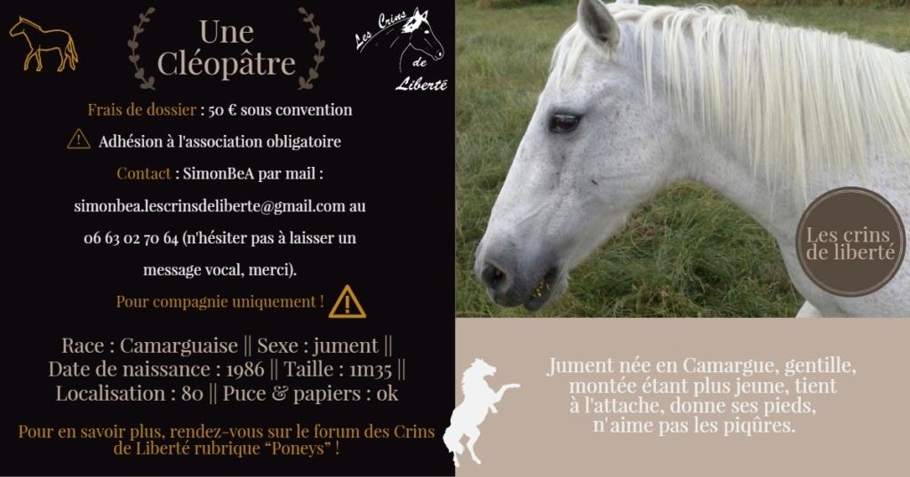 Dept 80 - IRPA VON HEYBUHL & UNE CLEOPATRE  - poneys - sauvées par Mickael  Fiche129