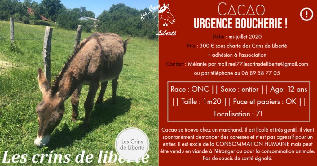 (Dept 71) 12 ans - CACAO - ONC âne - Mâle - Sauvé par Sarah A. (oct 2020) Fiche129