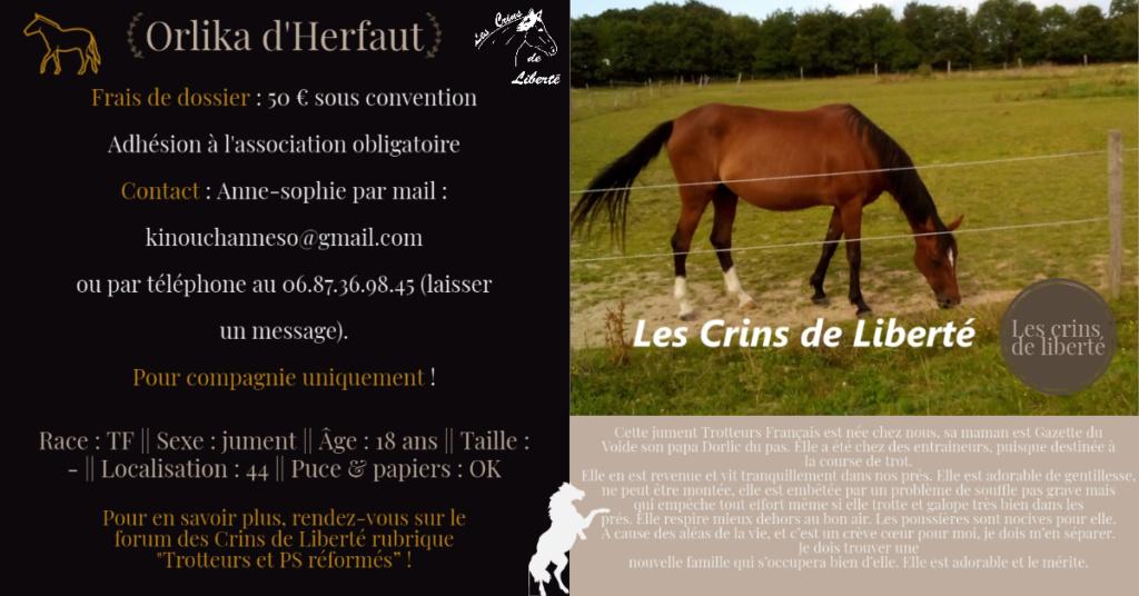 Dpt 44 - 18 ans - ORLIKA D'HERFAUT - TF - Contact Anne-sophie Fiche141