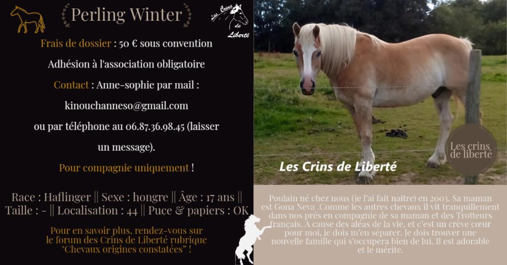 Dpt 44 - 17 ans- PERLING WINTER - Haflinger - Contact Anne-sophie Fiche142