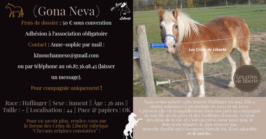 Dpt 44 - 26 ans- GONA NEVA - Haflinger - Contact Anne-sophie Fiche143