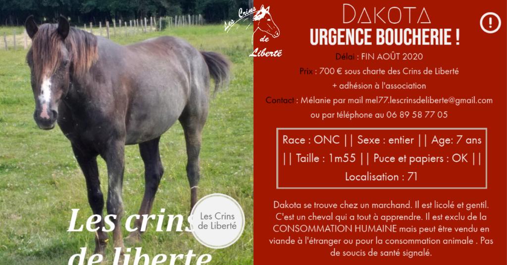 (dept 71) 7 ans - DAKOTA - ONC Selle - Mâle - Réservé par Lola G. (oct 2020) Fiche147