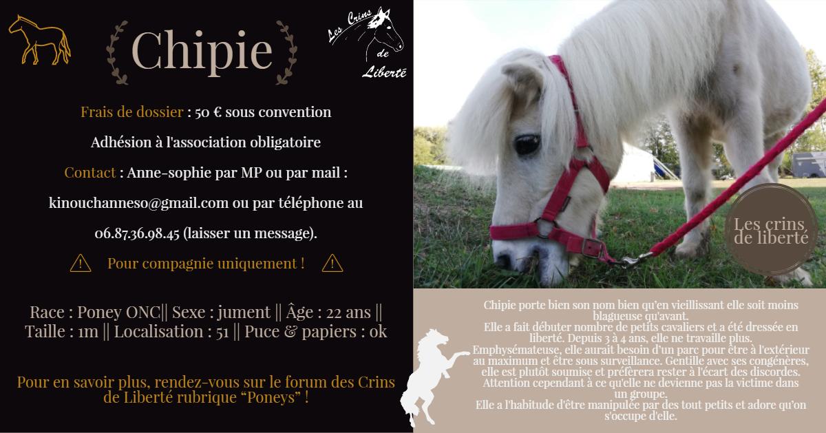 Dpt 51 - 22 ans - CHIPIE - ONC poney adoptée par Murielle Fiche_21