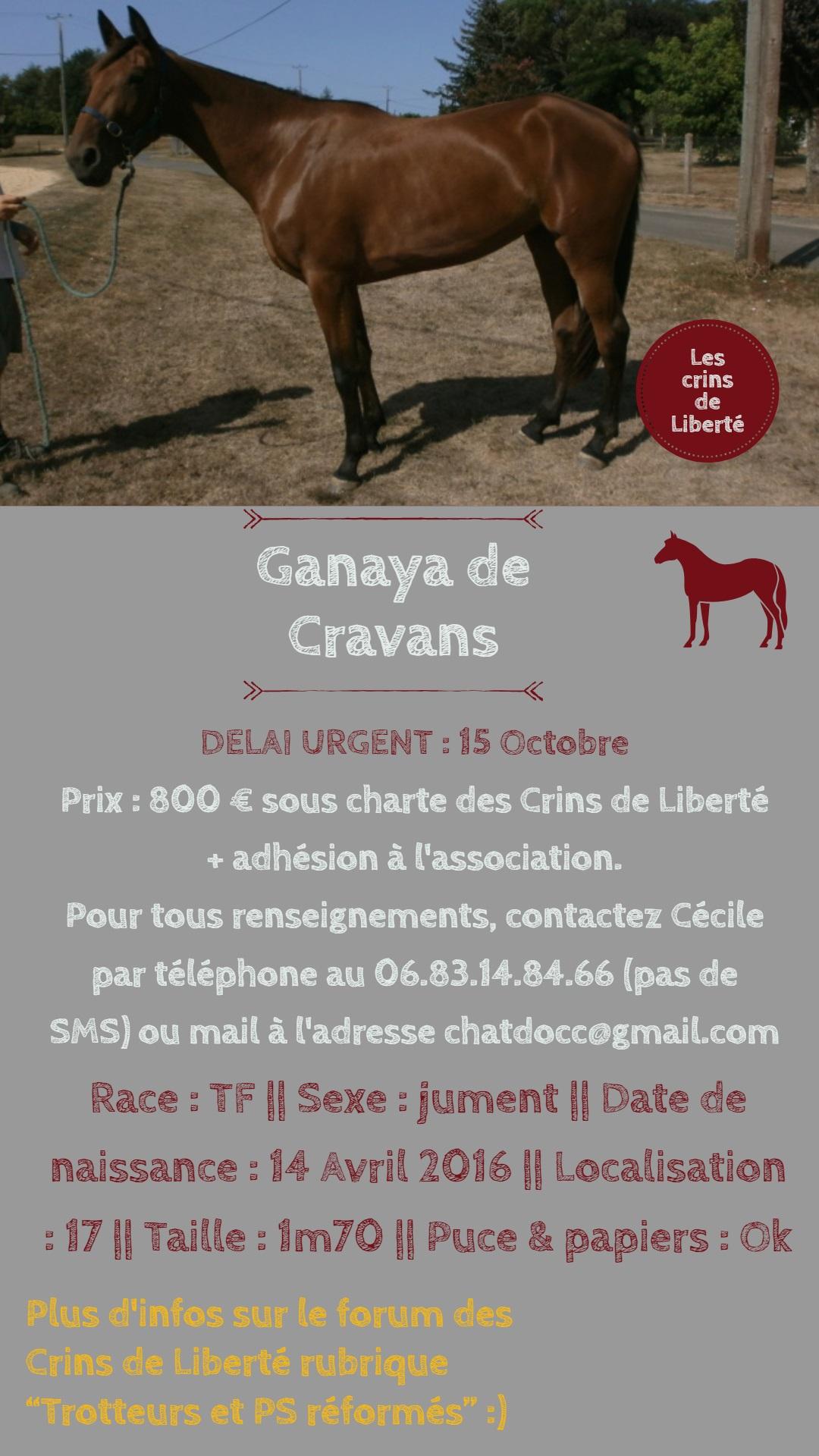 Dpt 17, 3 ans, Ganaya de Cravans, adoptée par Séléna (mars 2019) Fiche_44