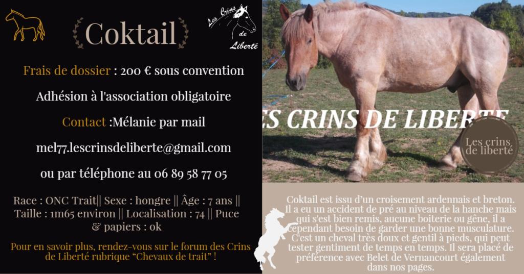 (Dept 74) 7 ans - COKTAIL - ONC T - Hongre - réservé par Adrien M.  Fiche_45