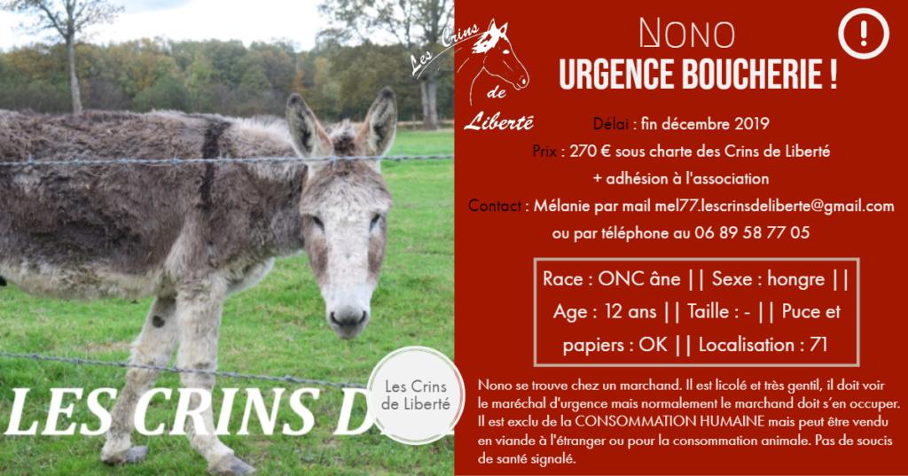 (dept 71) 12 ans - NONO - ONC âne - Hongre - Réservé par Yolaine A. (mai 2020) Fiche_70