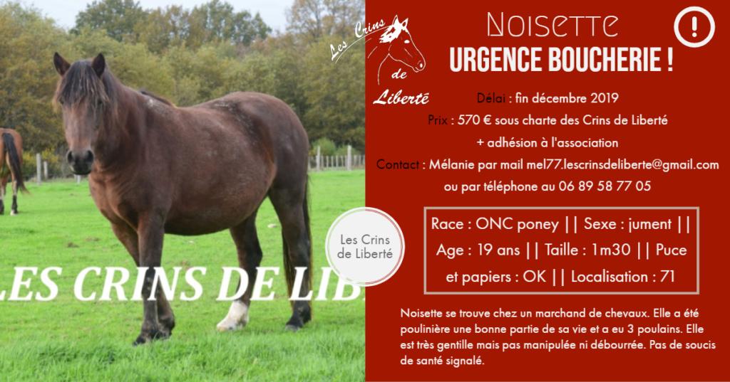 (Dept 71) 19 ans - NOISETTE - ONC poney - Jument- PARTI ESPAGNE  Fiche_72