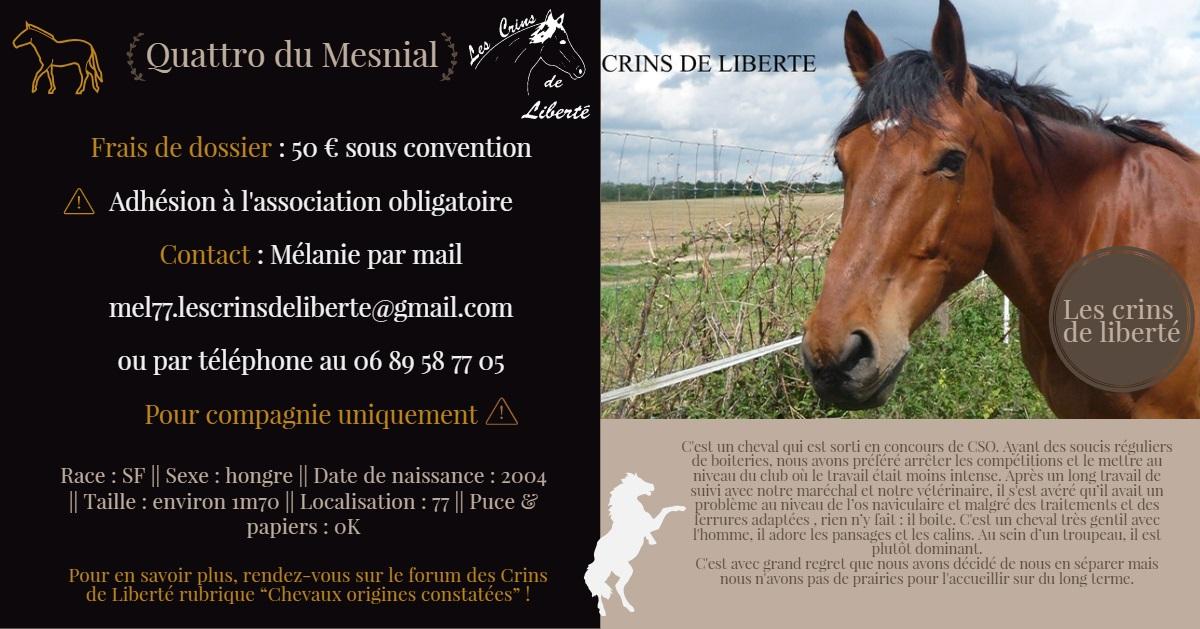 Dept 77, 13 ans, QUATTRO SF, contact mel77 Fiche_77