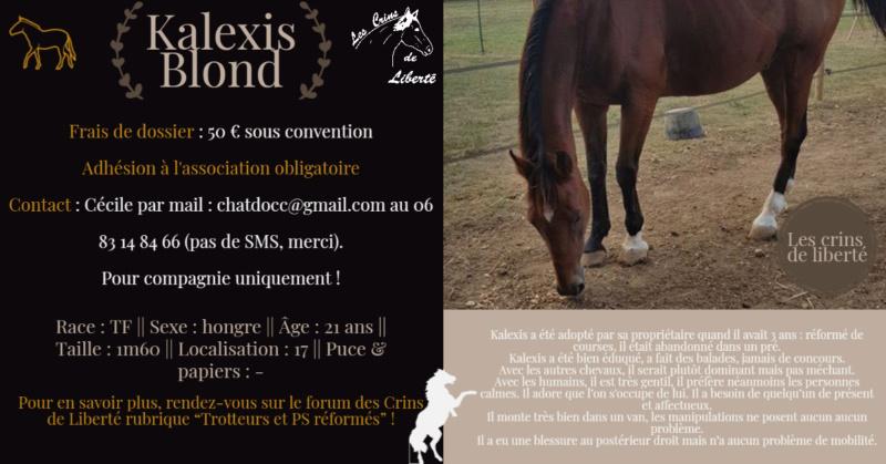 Dpt 17, 21 ans, Kalexis, hongre TF, contact Cécile Fiche_77