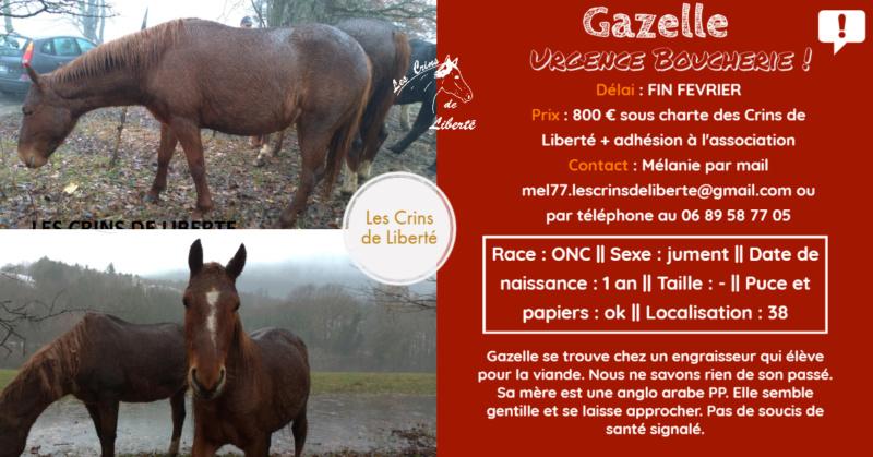 (Dept 38) 1 an - GAZELLE - ONC Selle - Jument - Réservé par catherine G. (mars 2020) Fiche_93
