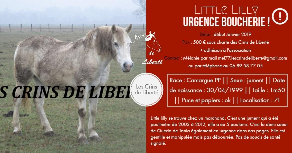(Dept 71) 19 ans - LiTTLE LiLLY - Camargue PP - Jument - Réservée par Nadia (mars 2019) Fiche_96