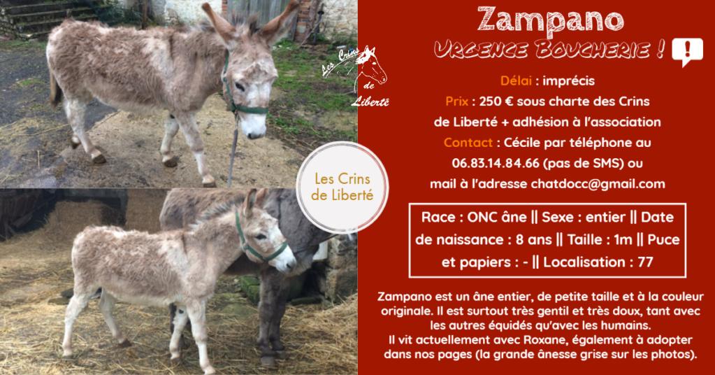 Dpt 77, 8 ans, Zampano, âne ONC, adopté par Claire (juin 2020) Fiche_99