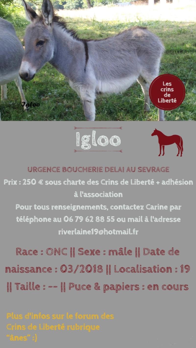 Dept19-5 mois- IGLOO-ânon ONC- réservé par EnoraC (oct 2018) Igloo11