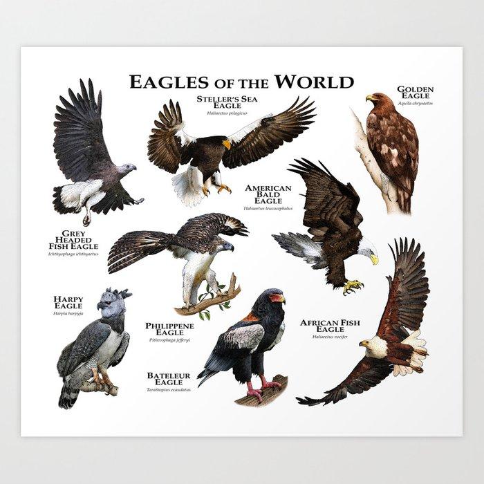 FAUNA Y PAISAJES Eagles10