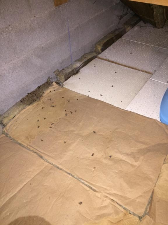 Que faire de mon nid de frelons Img_9713