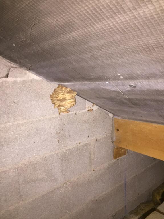 Que faire de mon nid de frelons Img_9717