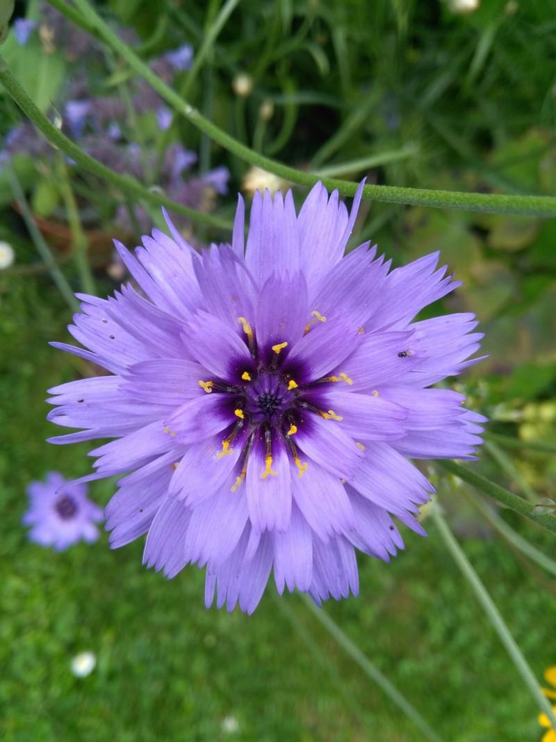 Dix belles bleues dans mon jardin 20180754