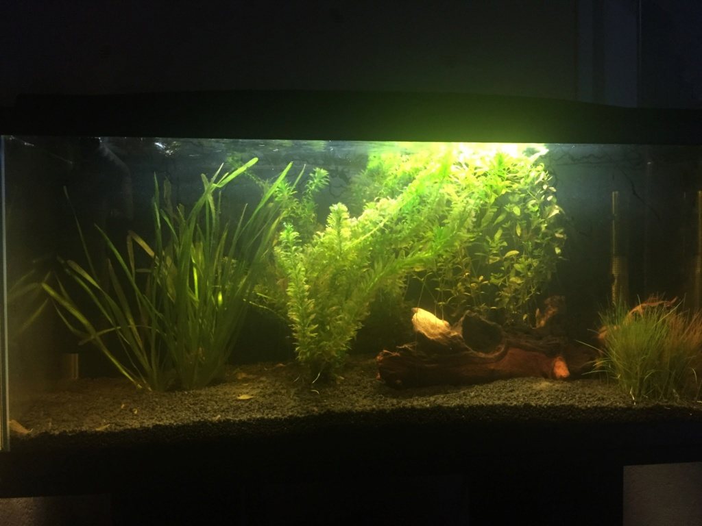 Mon aquarium Ab222310