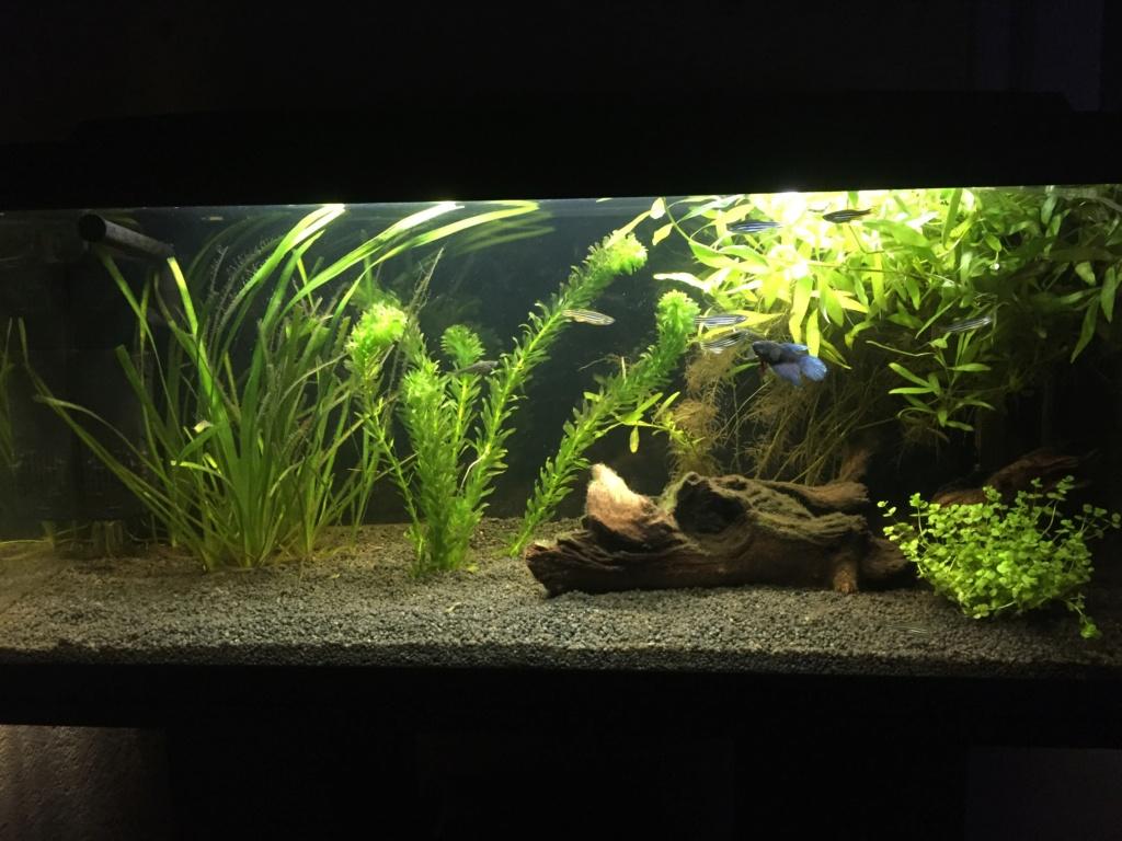 Nettoyage de l'aquarium et  E3172810