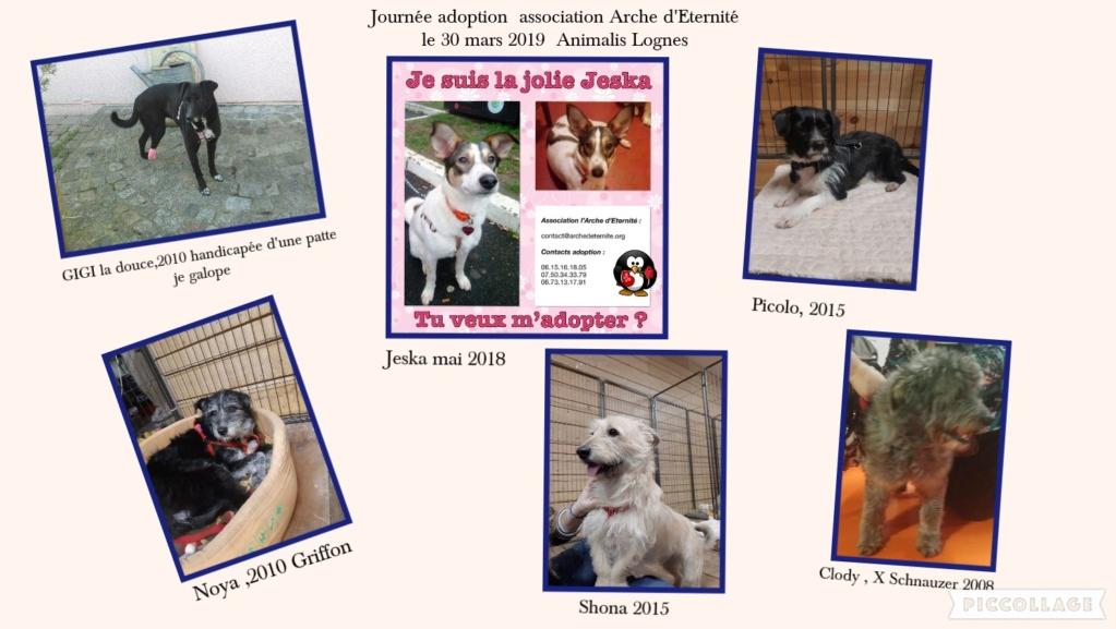 Journée adoption 30 mars Lognes Affich10