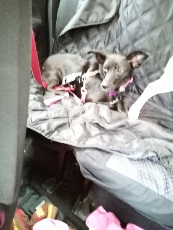 PAPRIKA née le 01/01/2020, maman et son bébé trouvés au bord de la route- EN FA DANS LE 95- R-SC-30MA- Img_2040