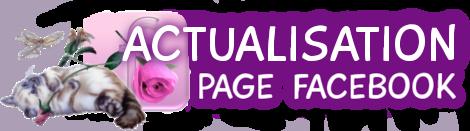 Formulaire facultatif pour actualiser la pub de son groupe Facebook Actu-f11
