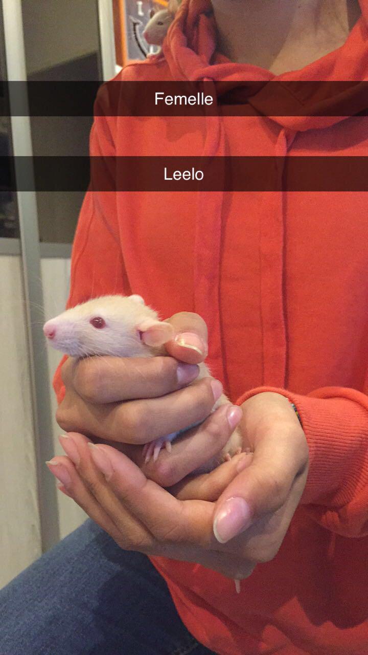 8 petits rats cherchent FA à Lyon (69) Img-2015