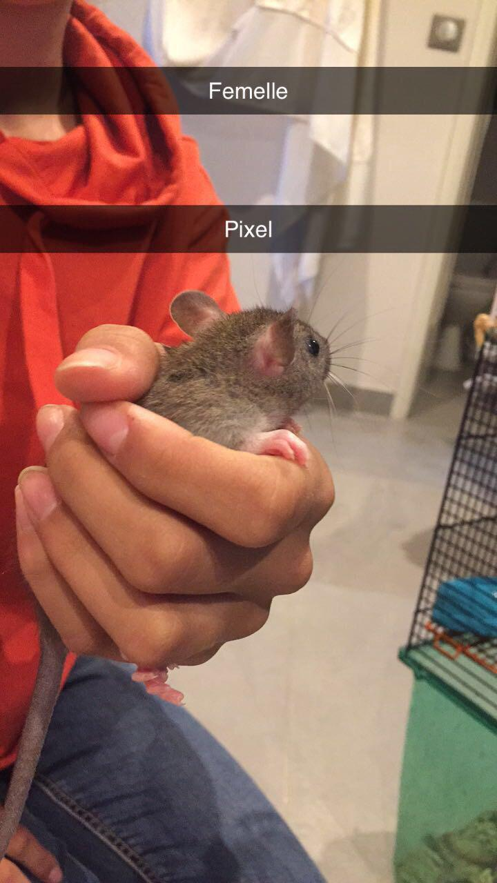 8 petits rats cherchent FA à Lyon (69) Img-2017