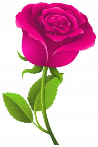 ::Desfile de Rosas AMDA::Hoy se presenta la Rosa Rosa AMDA  Images12