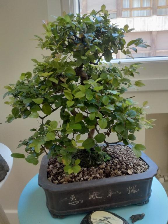 Que tipos de bonsai tengo? 15950711